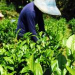 他貸款200萬投資茶園,不只是要泡好茶!還因為做這件事,守護了大台北的飲水安全