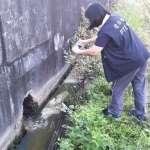 屏縣環保局查獲7家牧場國慶連假違規排汙水