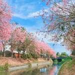 台灣竟然有這麼美的花海!5處最強賞花秘境大公開,一大片又粉又黃真的不輸國外啊