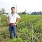雜草也能變黃金?別人笑他太痴傻,他堅持自然農法種好茶!