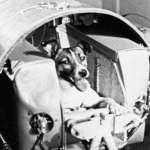 蘇聯太空狗60周年》無辜踏上不歸路,痛苦死狀被瞞半世紀,牠是冷戰期被忽視的一頁血淚…