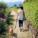 遛狗好處多多?自己不但能順便運動,心情還會變好!專家這樣建議,讓主人跟毛孩都開心