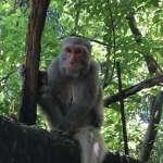 風評:只能請到猴子,原因不止只拿得出香蕉而已