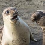 誰准你們那麼會演啦!搞笑動物攝影獎出爐,難得一見的超爆笑動物諧星通通在這!