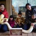 動物園抽獎大會1等獎 為何提供黃金蟒蛇皮?
