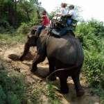 尖鉤刺皮膚、四肢栓鐵鍊…揭大象觀光殘酷黑幕,看完這些你還忍心去騎象?小心成幫兇