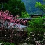 擁低海拔熱帶雨林及美人湯泉 溫泉酒店推年節促銷方案