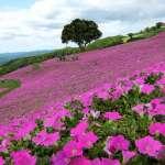 關東自由行》千葉7處絕美景點,祕境、無人島、牧場…當天就能往返東京!