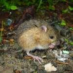 為何跳鼠該救,蟑螂卻該死?英國哲學家用這個簡單的問題,指出人類最難發現的盲點