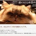 貓奴們、朝拜吧!2月22日就是要「喵喵喵」,日本今天歡慶喵喵節