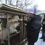 平昌冬奧的暖心風景》美國同志滑雪選手造訪狗肉屠宰場 與男友聯手救出90隻毛孩子
