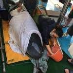 小抹香鯨「關關」擱淺金山海灘 關渡國小疾速救援助「返家」