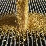 中國需求太大 縱有貿易戰仍得買美黃豆