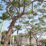 台北38.2度打破122年來5月最高溫紀錄!氣象局:注意防曬、多補充水分預防中暑