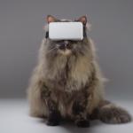 不是在胡鬧?貓也能戴VR?美公司推出「貓用VR」,讓你家貓咪不出門,也能知自由滋味!