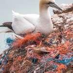 一年內,來自中國、越南的海漂垃圾重達數百公斤…中研院揭露海洋汙染最險峻真相