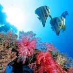 世界地球日,看見「南疆太平之舞」盼喚醒國人海洋保育意識