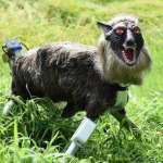 有片》日本人又發明怪東西!這「超級怪獸狼」能吼出50種聲音,嚇歪想偷吃作物的小鹿!