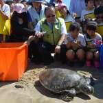 15隻傷癒海龜今野放 澎縣府歡送回歸大海懷抱