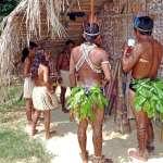 喝下特殊飲料當「神明的精液」勃起後驕傲地裸身在村中走動…亞馬遜部落的春藥文化