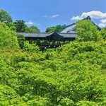 比紅葉還迷人! 初夏遊京都4處清新的「青楓」絕景,黛安娜王妃也曾造訪過!