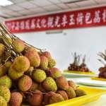 杜宇觀點:荔枝盛產考驗兩岸政府的應變力