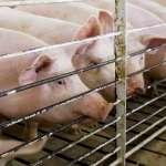 報復美國第一槍》墨西哥對美豬、農產品、波本威士忌祭出懲罰性關稅!《北美自由貿易協定》岌岌可危