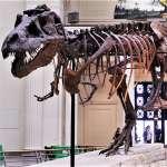 《侏羅紀》映後,有錢人瘋買「恐龍化石」當擺設!價格竟被炒到科學家想做研究卻買不起…