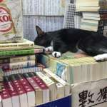 缺席香港書展的40年獨立書店》不只是「貓書店」,更要做閱讀的自由飛地