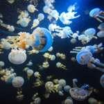 即使水母已死,也千萬別去碰牠!醫師警告民眾:夏季戲水務必當心「海邊殺手」