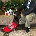 朱淑娟專欄:落實動物收容零安樂 需要更多行動支持