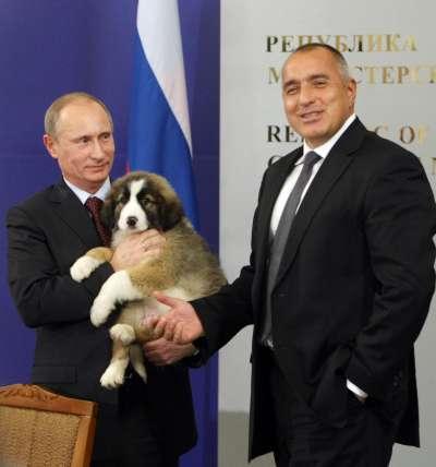 俄羅斯總統普京參加前蘇聯國家峰會,土庫曼總統贈送一隻中亞牧羊犬作為生日禮物。(美聯社)