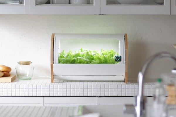 想當都市農夫?滑一下手機就能種有機蔬菜