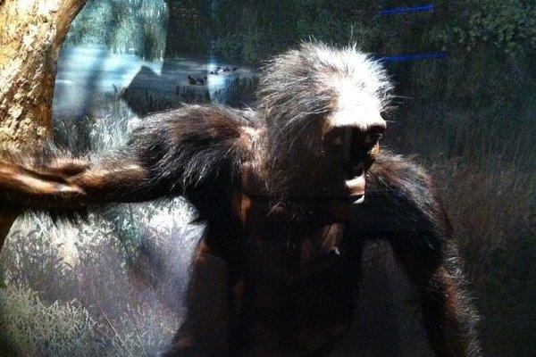 歷史上的今天》11月24日──古人類學家發現320萬年前的人類老祖母「露西」