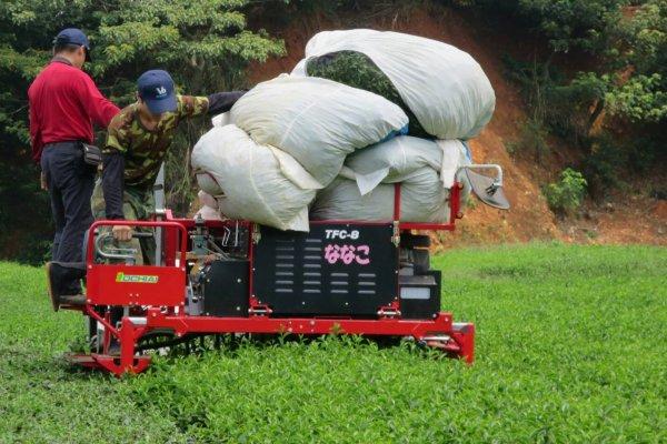 解決茶園缺工問題 農委會推出這招...