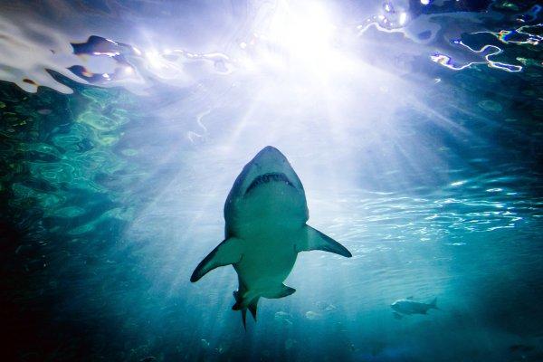 平凡工程師愛上海底攝影,拍到的珍貴畫面不只拿國際金牌,還發現這個狀況