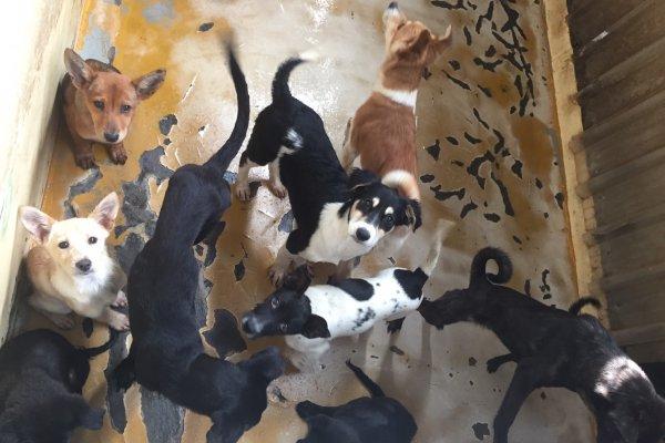 零安樂死時代》棄養更無道德譴責 流浪貓狗的天堂或地獄?