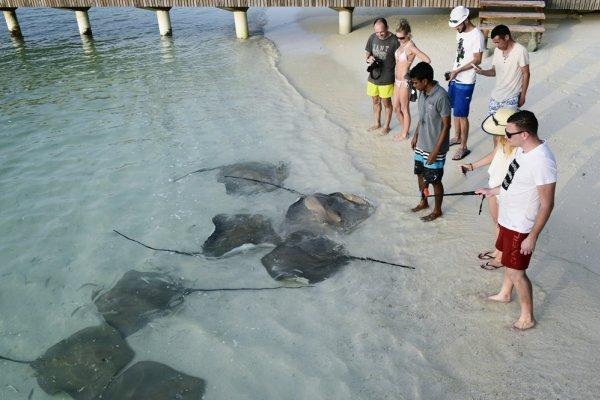 隨意餵魚傷害有多大?度假村潛水教練呼籲:現在你餵魚食物,以後你的小孩就變食物