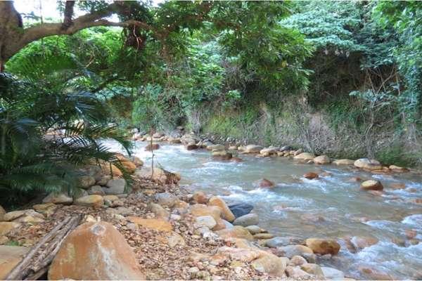 朱淑娟專欄:天母磺溪生態秘境,何需親水步道破壞生態?
