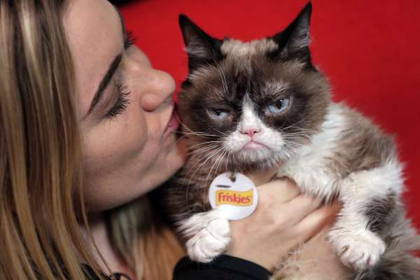 別讓「不爽貓」不爽!Grumpy Cat打官司,贏得兩千萬台幣賠償