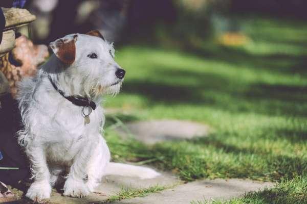 老闆要我照顧他狗該怎麼辦?該默默承受還是一走了之?