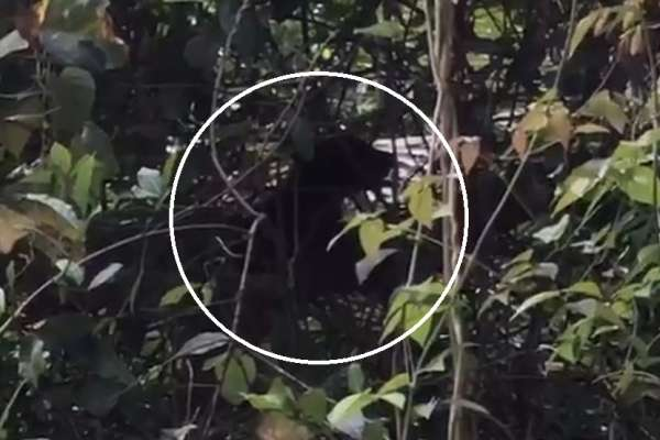 花蓮流浪小黑熊找媽媽 專家:圍觀拍照只會害了牠