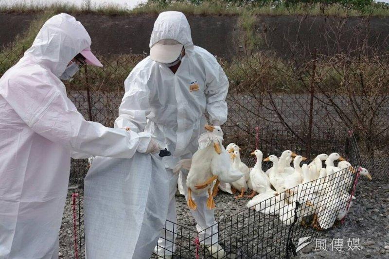 北市家禽批發市場昨夜11時起宰殺9.4萬隻雞鴨後,17日下午進行屠宰場區大消毒,為了避免擴散,屠宰線將禁宰7天。(資料照,屏東縣政府官網)