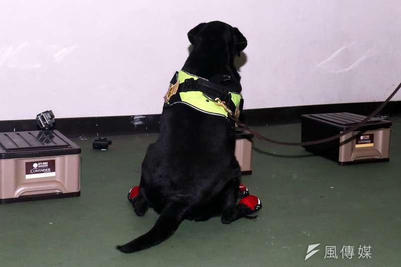 20180201-憲兵指揮部安排警衛大隊軍犬分隊接受媒體訪問,演練開始後,由領犬員帶領犬隻搜索帶有爆裂物氣味的物品,待發現疑似爆裂物位置時,犬隻會立刻坐下來,示意領犬員。(蘇仲泓攝)
