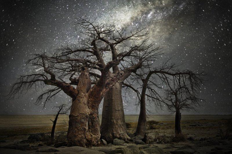 《鑽石之夜》系列都以星座命名,這張名為Volans,飛魚座(圖/經授權轉載自Beth_Moon)