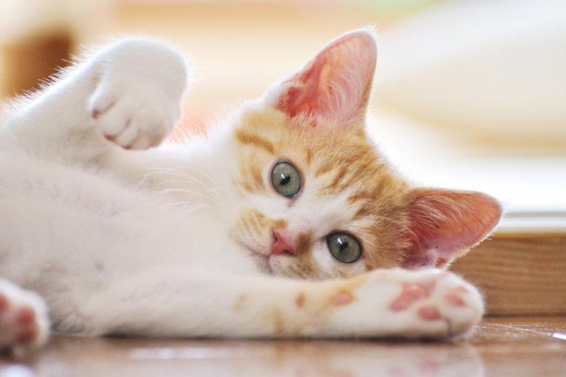 貓咪到底在說什麼呢?大概有這10個原因!(圖/yoppy@flickr)