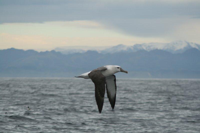 克馬德克海洋保護區(世界自然基金會紐西蘭分會)