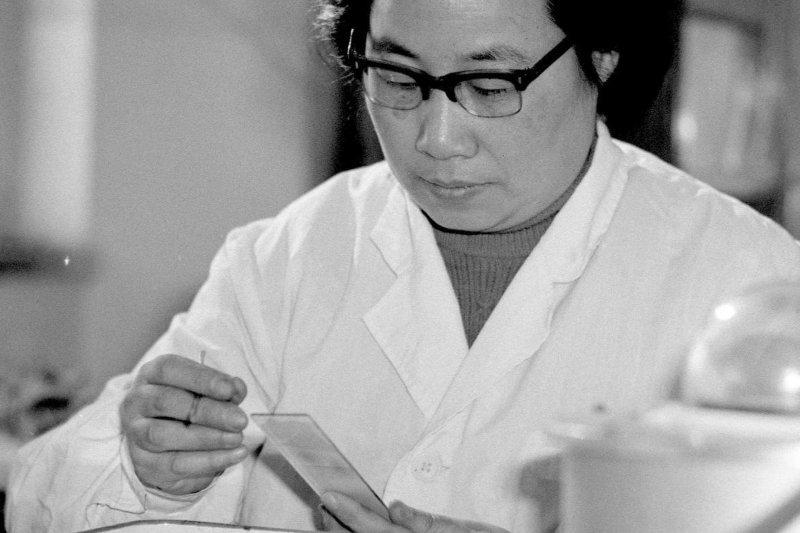 屠呦呦率領的小組發現了治療瘧疾的青蒿素。(美聯社)