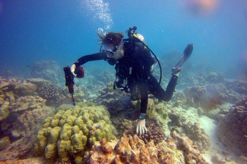 全球暖化對海洋裡的珊瑚礁帶來相當嚴重的影響(AP)