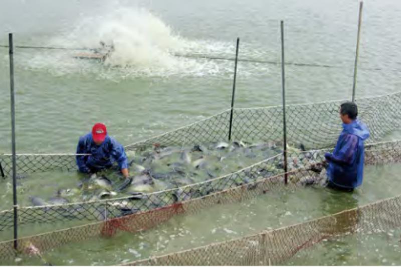 作者呼籲,政府別輕易毀了台灣辛苦建立的養鰻產業!(擷取自行政院農業發展委員會漁業署)